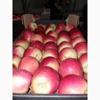 Продам яблоко с Польши