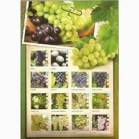 Саженцы плодовых деревьев из Сербии
