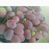Продаю виноград. Ризамат