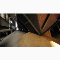 Пшеница 4 класса DAP Сары-Агач