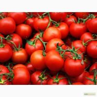 Продажа помидор
