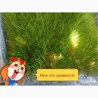 Зеленая масса корм для крс и мрс