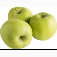 ПРОДАМ Яблока оптом семрянка