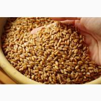Продам пшеницу 3, 4 класса, фураж