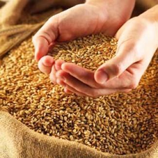 Пшеница 3 и 4 класса