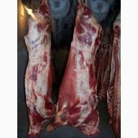 Мясо говядина (заморозка)