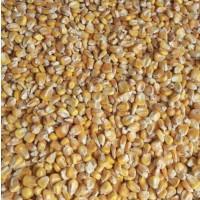 Продаём фуражную кукурузу