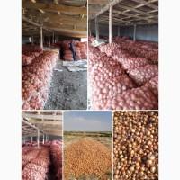 Продам лук урожай 2019 г с поля