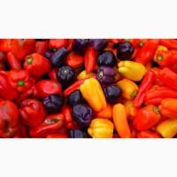 Продается сушеный болгарский перец 1 сорт