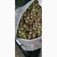 Продам виноград оптом сорт Тойфи, Самаркан