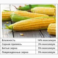 Закупка кукурузы (фуражная)