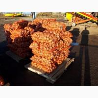 Картофель: королева анна, бриз, скарб, джувел, кроне