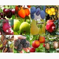 Саженцы фруктовых, декоративных, кустарниковых а также роз