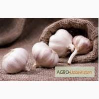 Продам чеснок (Garlic)