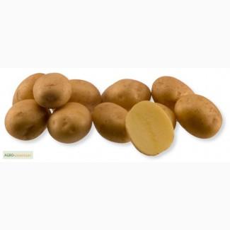 Продажа семенного картофеля